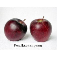 Яблоня Ред Джонапринц